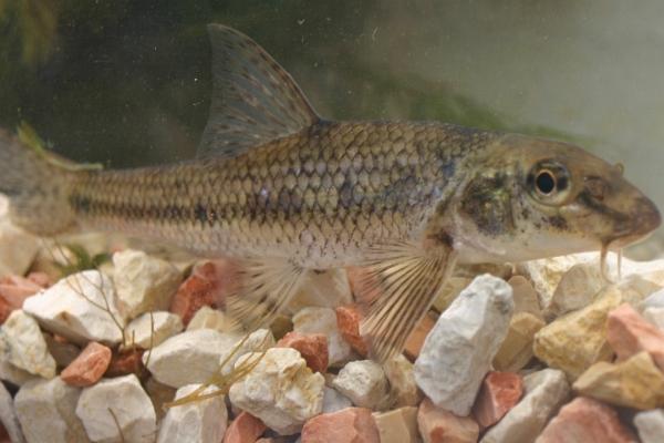 Koi goldfische shubunkin eigene fischzucht hagmans for Was fressen teichfische